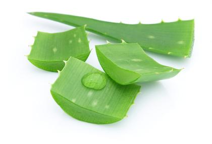 Aloe verra : un remède naturel contre les brûlures d'estomac.